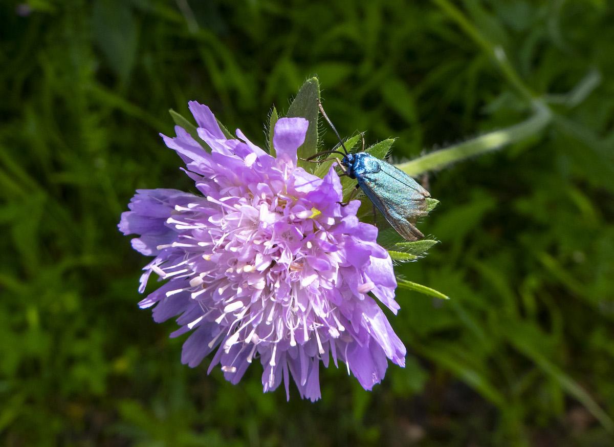 En habits de lumière Papillon01