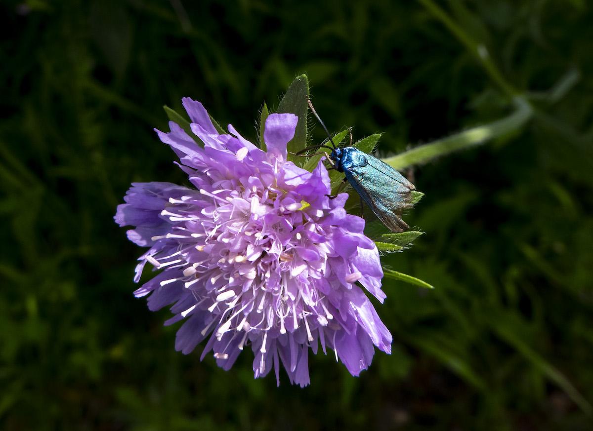 En habits de lumière Papillon18